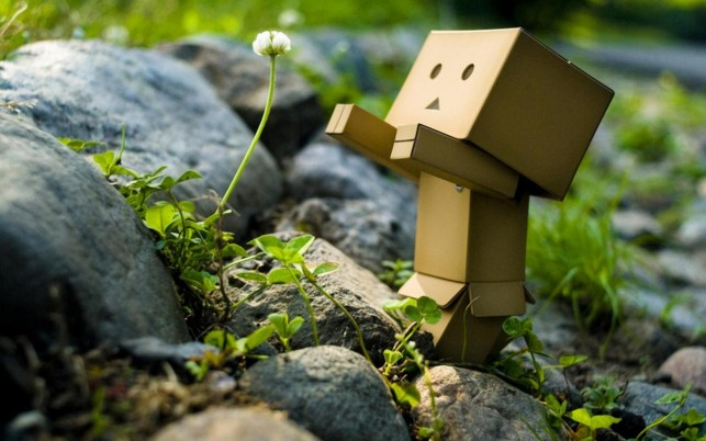 Robot Flower, danbo wallpapers and stock photos