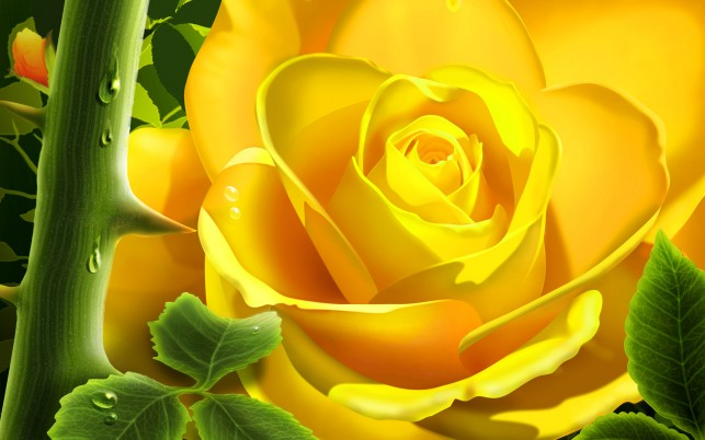 Yellow Rose Flower, flowers wallpapers and stock photos