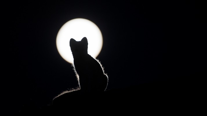 cat, silhouette, kitten, moon wallpapers and stock photos
