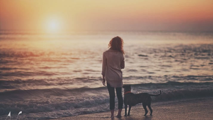sea​​, dog, happiness, freedom wallpapers and stock photos