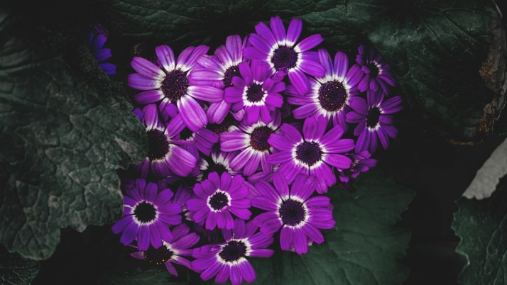 flowers, lilac, flowering, pet wallpapers and stock photos