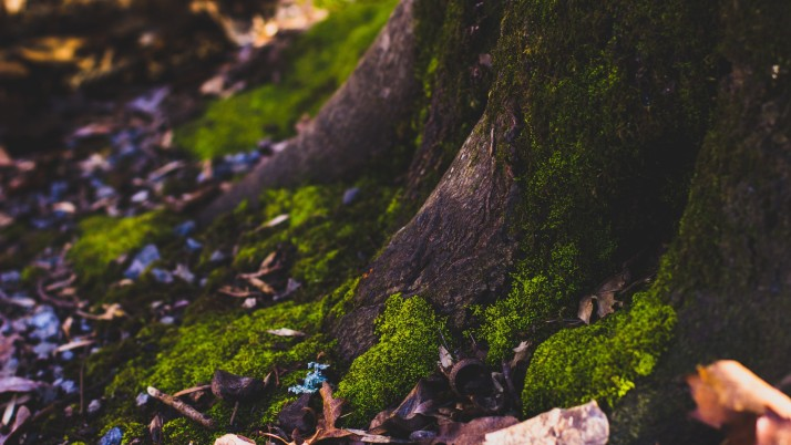 moss, tree, trunk, foliage, au wallpapers and stock photos