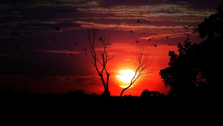 sunset, tree, sky, birds wallpapers and stock photos