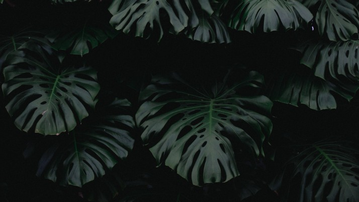 leaf, green, dark, plant wallpapers and stock photos