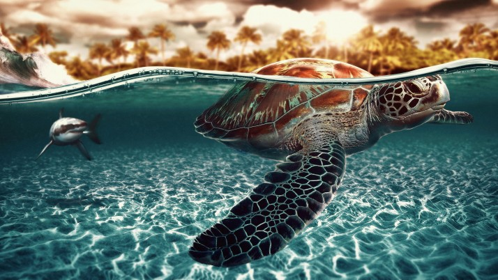 Sea Turtle, scenes, beach wallpapers and stock photos