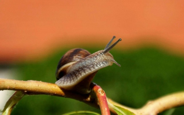 Macro, reptiles, animal, animals wallpapers and stock photos
