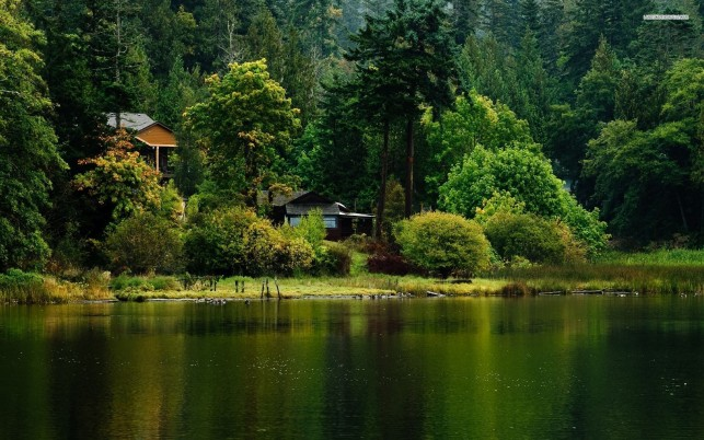 Little cabin at the lake side, forest, tree, nature wallpapers and stock photos