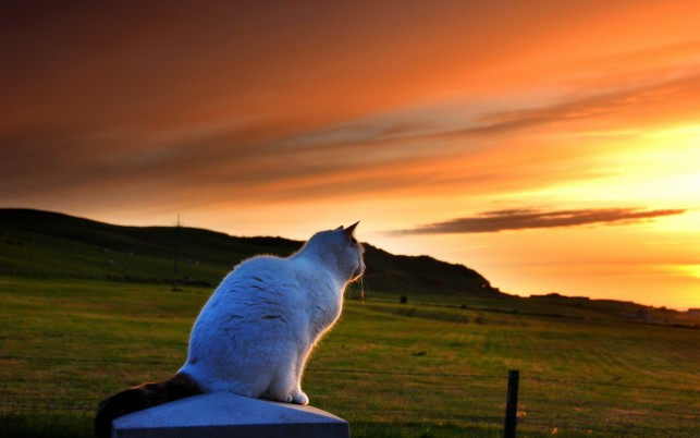 Cat Sunset,  animal wallpapers and stock photos
