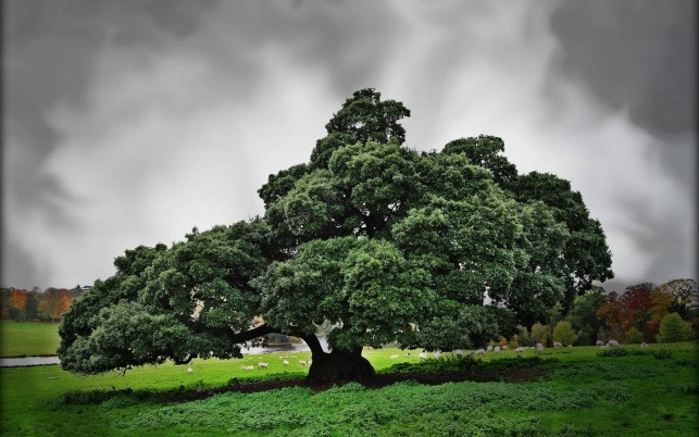 Big Green Tree wallpapers and stock photos