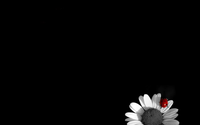 Black And White,  flowers wallpapers and stock photos
