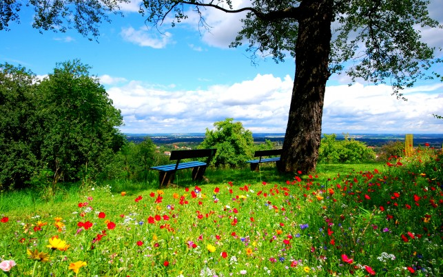 Crocus flowers on the meadow, bench, tree, summer, nature wallpapers and stock photos