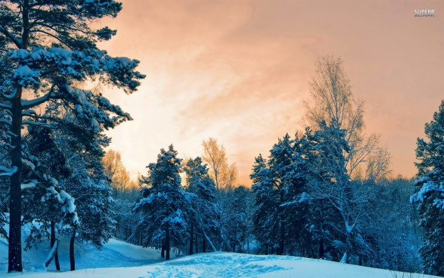 Snow in the dusk, winter, tree, nature wallpapers and stock photos