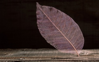 Random: Transparent Leaf