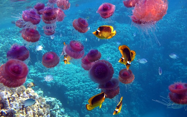 Jellyfish, ocean, coral, underwater wallpapers and stock photos