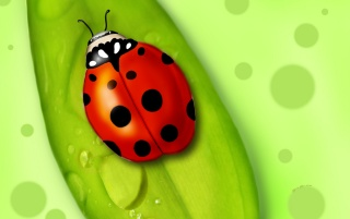 Lady Bug wallpapers and stock photos
