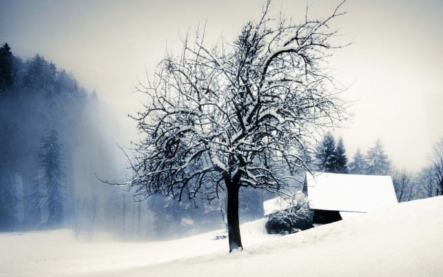Tree in the snow, forest, winter, house, nature wallpapers and stock photos