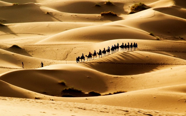 ??????? ????????, dessert, camel, caravan, nature wallpapers and stock photos