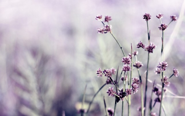 Field Facebook Cover, purple, flowers, little wallpapers and stock photos