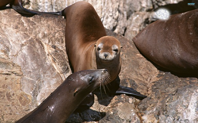 Previous: Sea lions, animal, animals