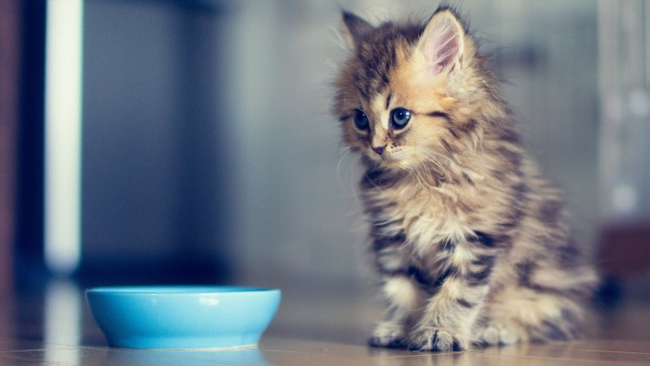 Cute Kitten wallpapers and stock photos