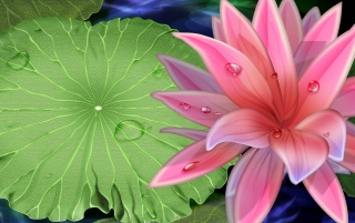 Pink Lily wallpapers and stock photos