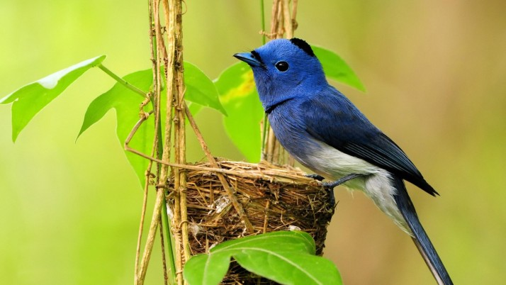 Bird, blue wallpapers and stock photos