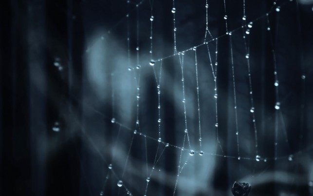 Spider Web,  gallery wallpapers and stock photos