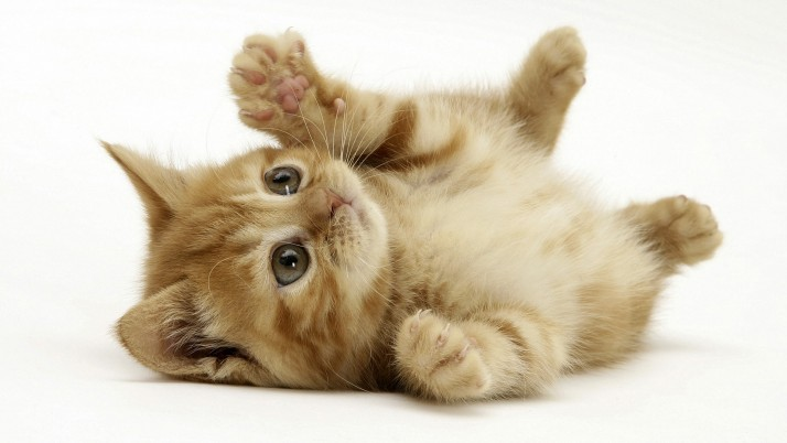 Cute Cat, little wallpapers and stock photos