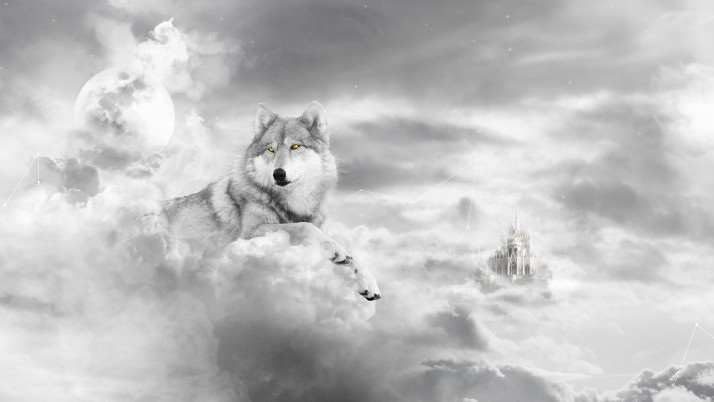 Cielo de lobo wallpapers and stock photos