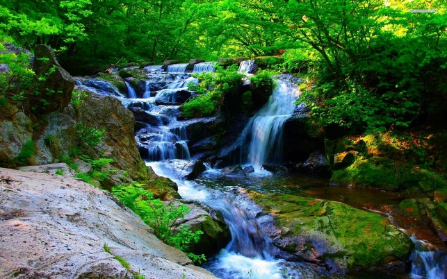Next: Cascading falls in the forest, tree, waterfall, nature