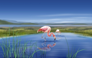 Next: Flamingos