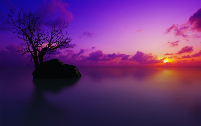 Sunset  nature, purple wallpapers and stock photos