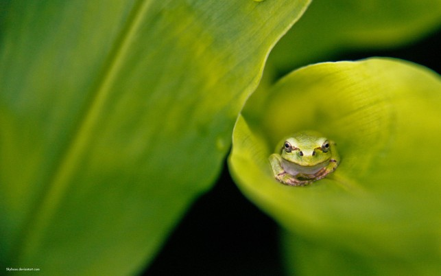 Frog Facebook Cover, animals, friend wallpapers and stock photos