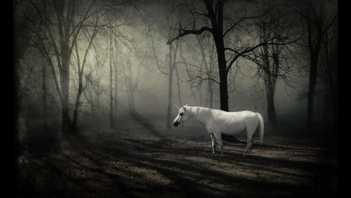 Unicorn in the forest, artistic wallpapers and stock photos