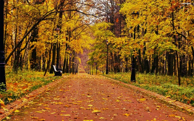 Beautiful autumn colors in the park, tree, path, nature wallpapers and stock photos