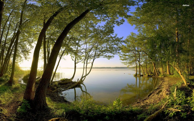 Previous: Lake in the forest, tree, nature