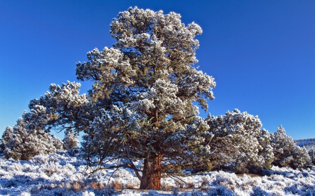 Big tree covered with snow, winter, cloud, sky, nature wallpapers and stock photos