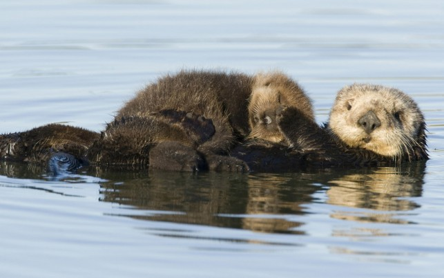 Random: Sea Otter Pup, animals, amazing, christmas