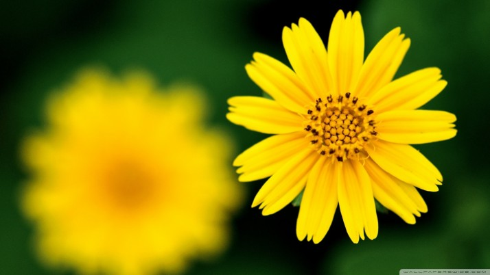 Yellow Flower, beautiful wallpapers and stock photos