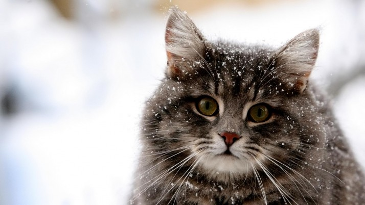 Cute Cat, gallery, saver, winter wallpapers and stock photos