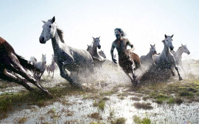 Running Horses, centaur, autumn, tapety wallpapers and stock photos