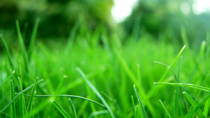 Refresh,  high, grass wallpapers and stock photos