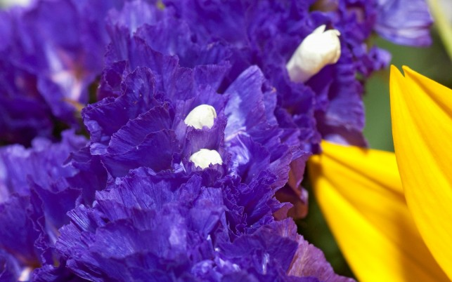 Purple,  gold, flowers wallpapers and stock photos