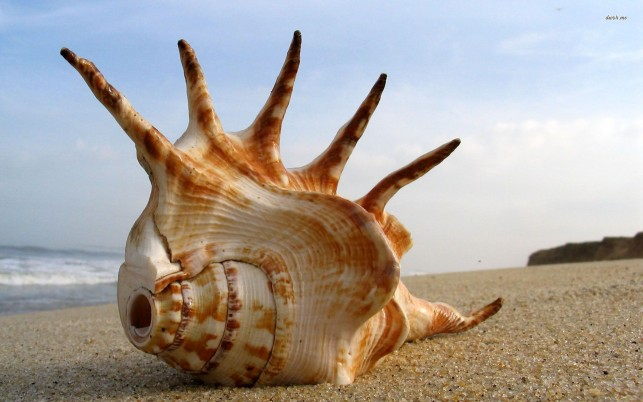 Seashell, sand, sky, photography wallpapers and stock photos