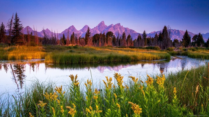 Flowers And Mountains, nature, awesome, parrot wallpapers and stock photos