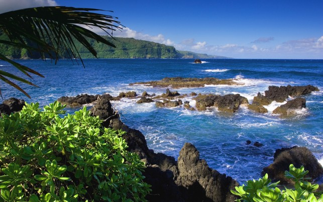 Rocky coast, sea, palm tree, summer, beach, beaches wallpapers and stock photos