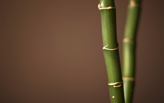 Random: Bamboo, nature,  photography
