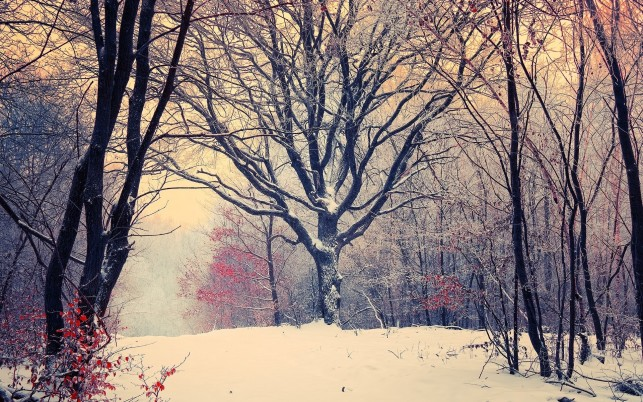 Previous: Early winter in the forest, tree, snow, nature
