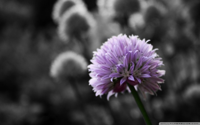 Flowers Black And White wallpapers and stock photos