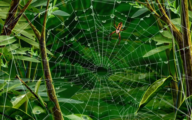 Next: Spider Web, nature,  spiders